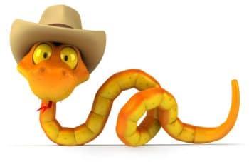python-visual